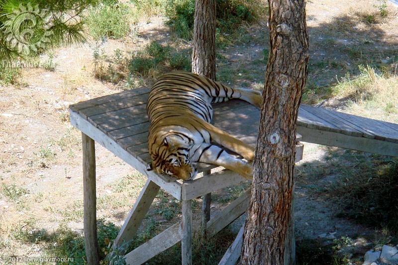 Четыре тигрёнка родились в сафари-парке Геленджика
