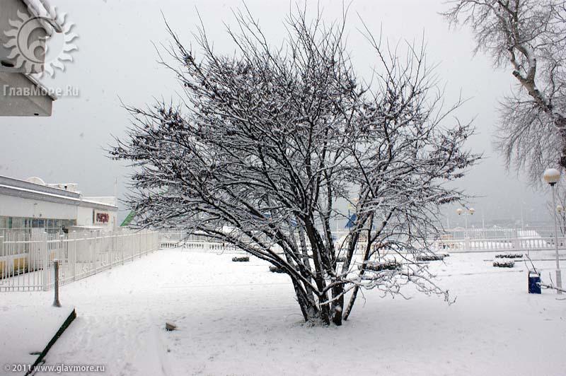 Геленджик завалило снегом фото 11