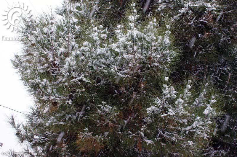 Геленджик завалило снегом фото 3