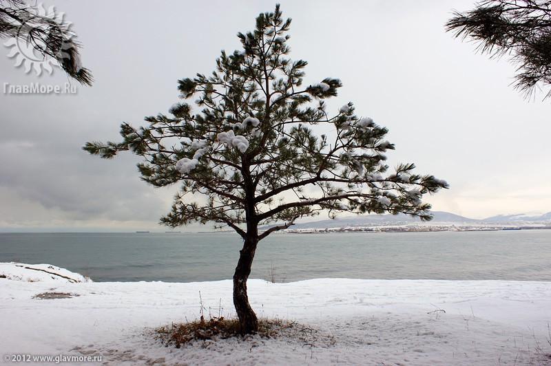 В Геленджике выпал снег фото 37