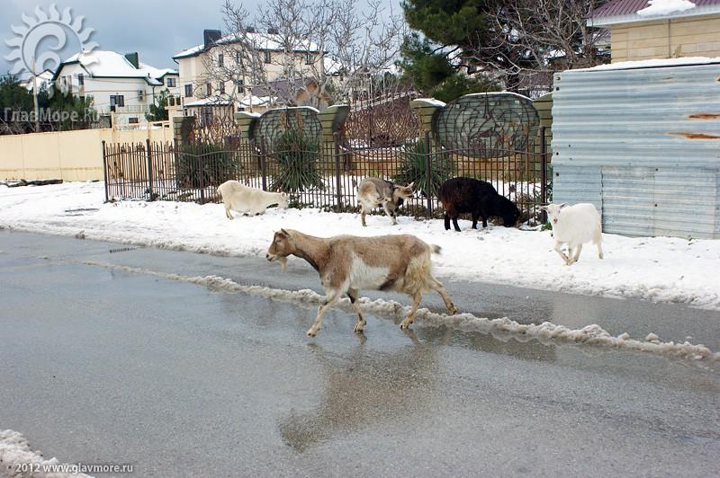 В Геленджике выпал снег фото 47