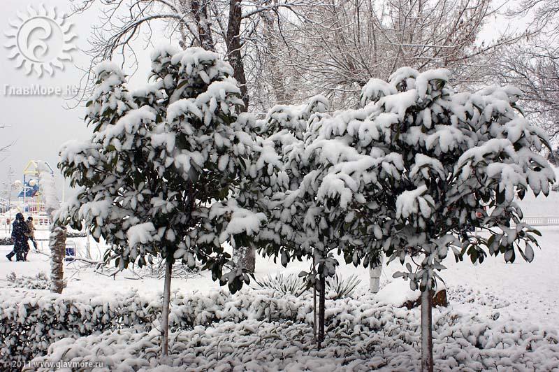 Геленджик завалило снегом фото 8