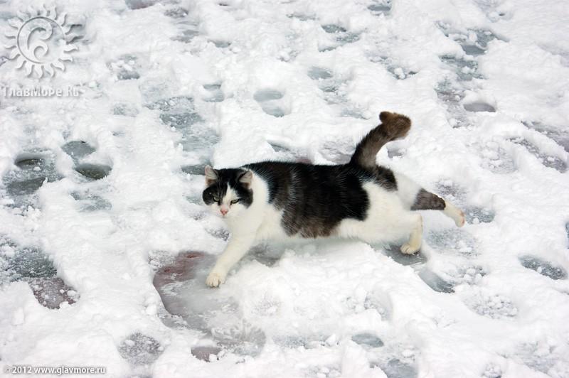В Геленджике выпал снег фото 28